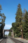 El Palo Alto