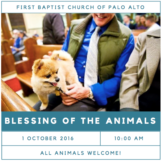Blessing Animals
